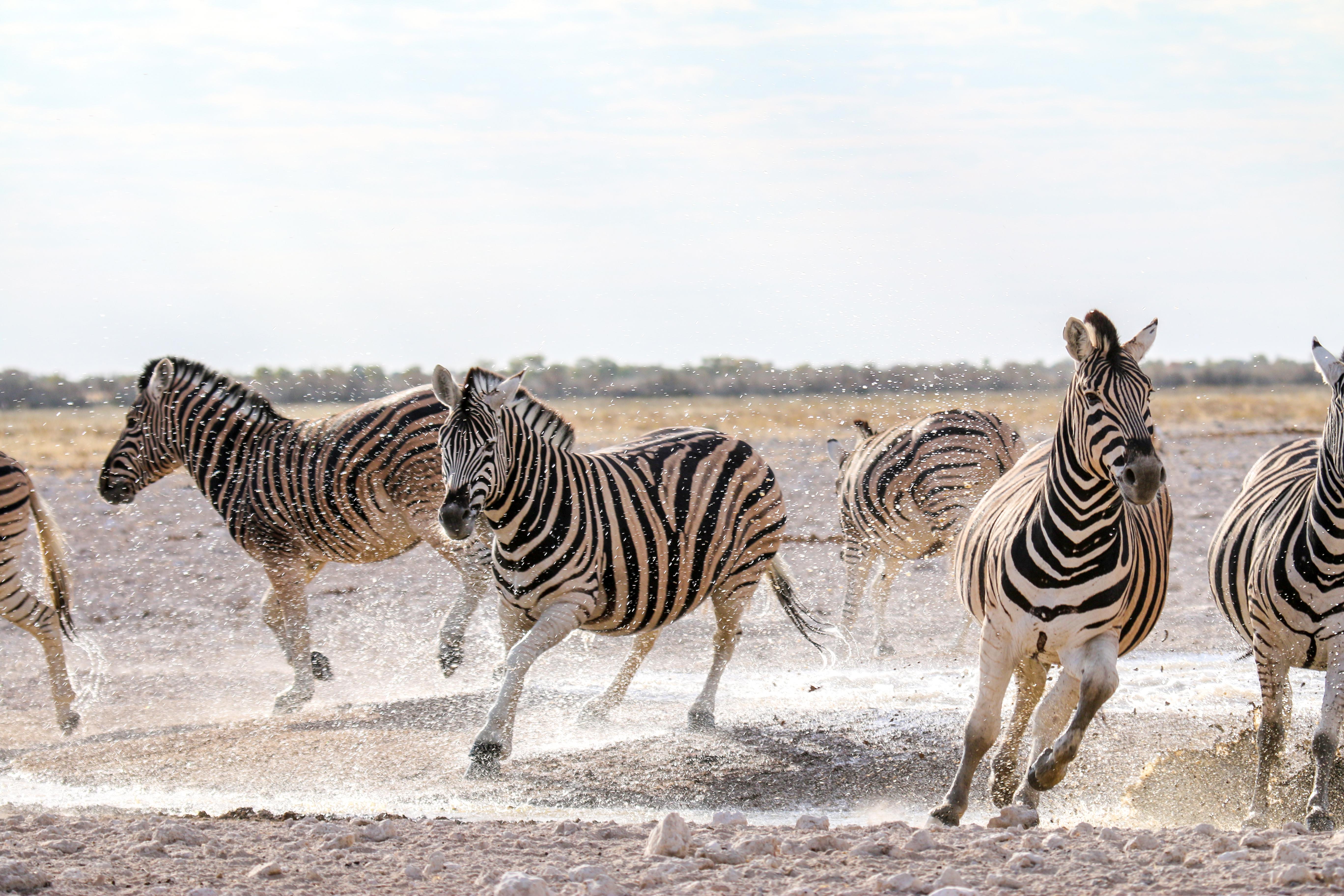 Namibia – Afrika für Anfänger